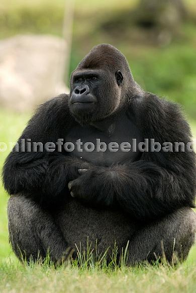 Gorilla de Mensapen